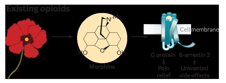 morphine pain relief