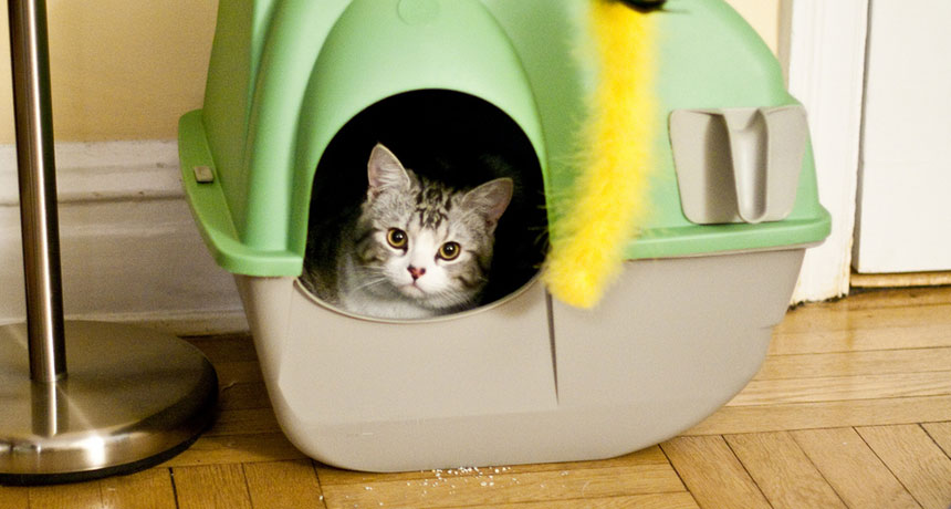 kitten in a litterbox