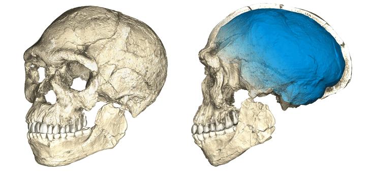 CT scans of potential earliest Homo sapiens
