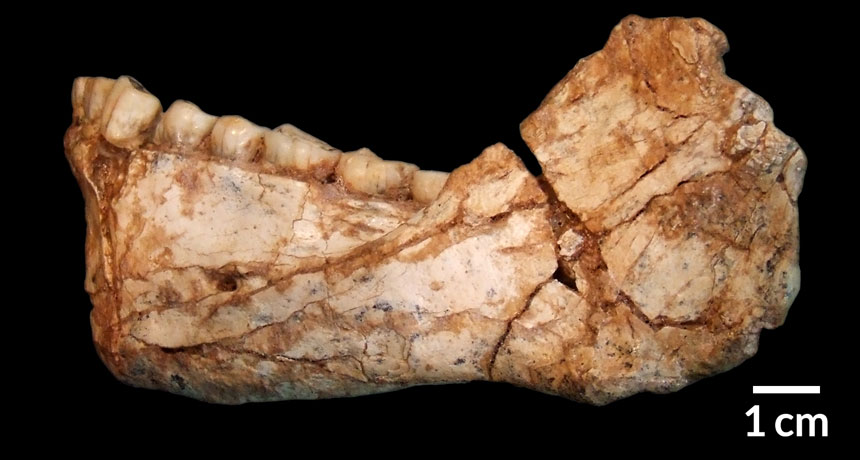 ancient lower jaw