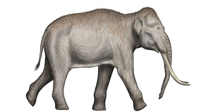 illustration of a straight-tusked elephant