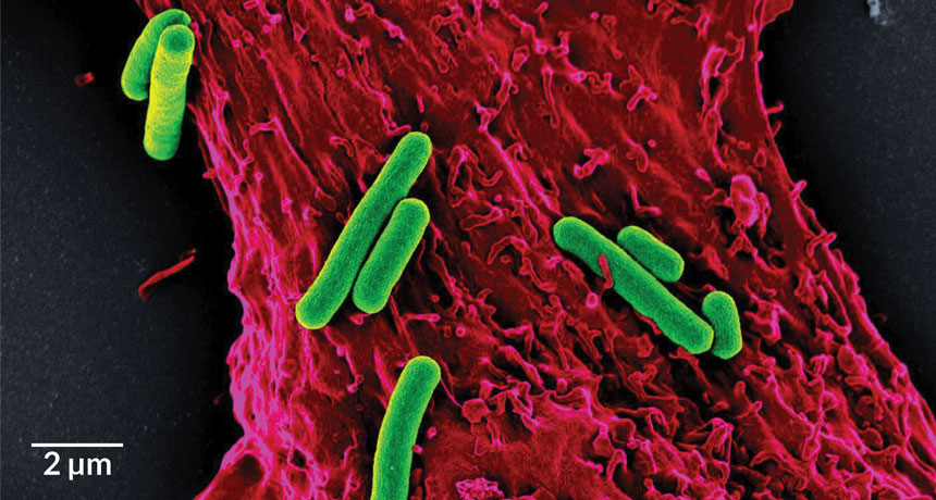 photosynthetic bacteria