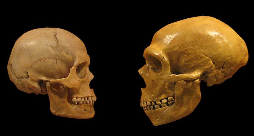 human skull and Neandertal skull