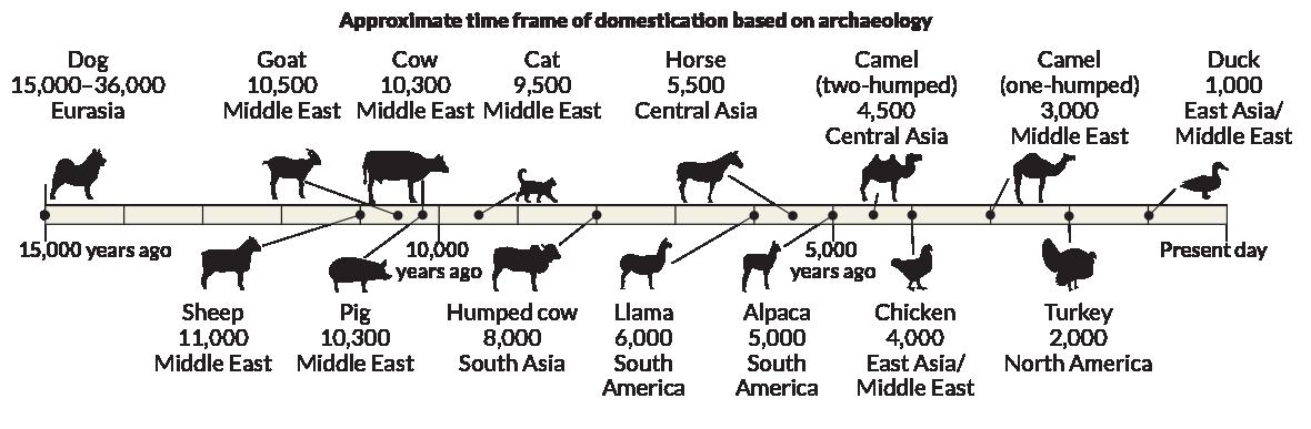 domestication timeline