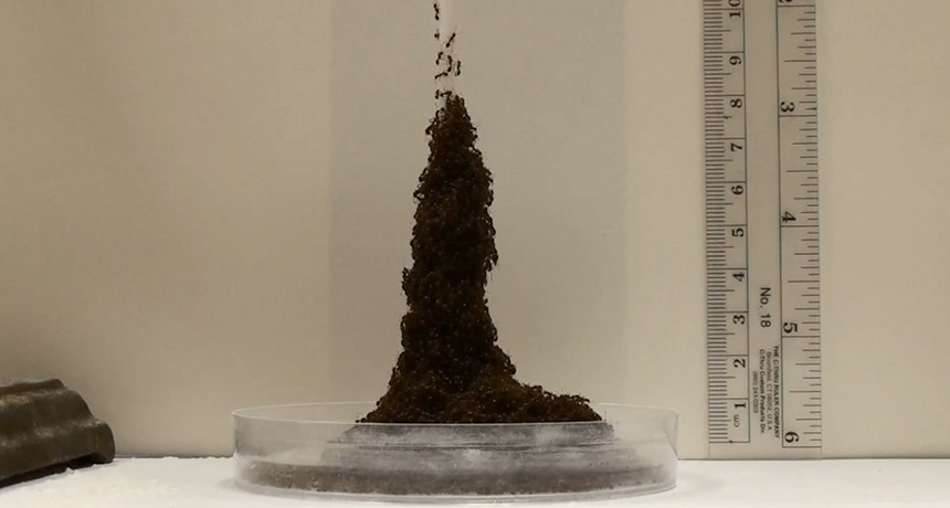fire ants forming a tower in the lab
