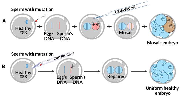 illustration of CRISPR editing process