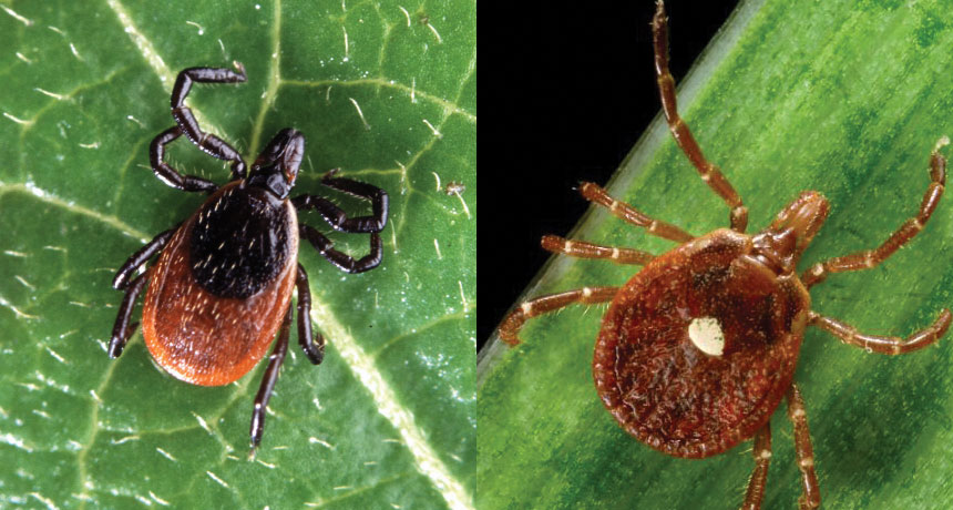 black-legged tick on the left, lone star tick on the right
