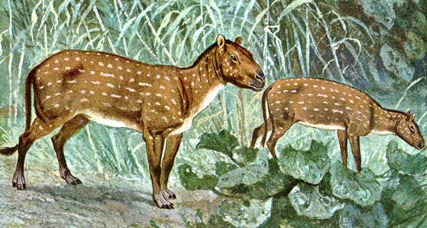Hyracotherium illustration