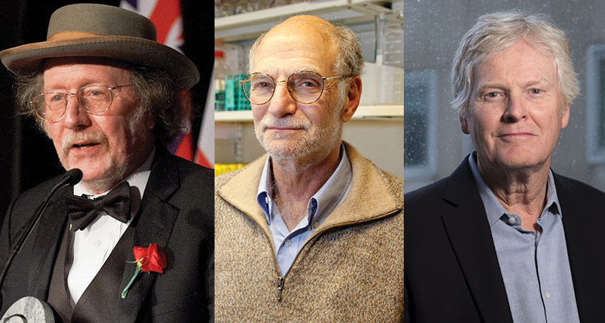 Hall, Rosbash and Young