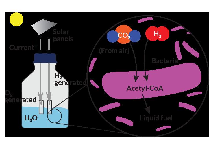 artificial leaf diagram