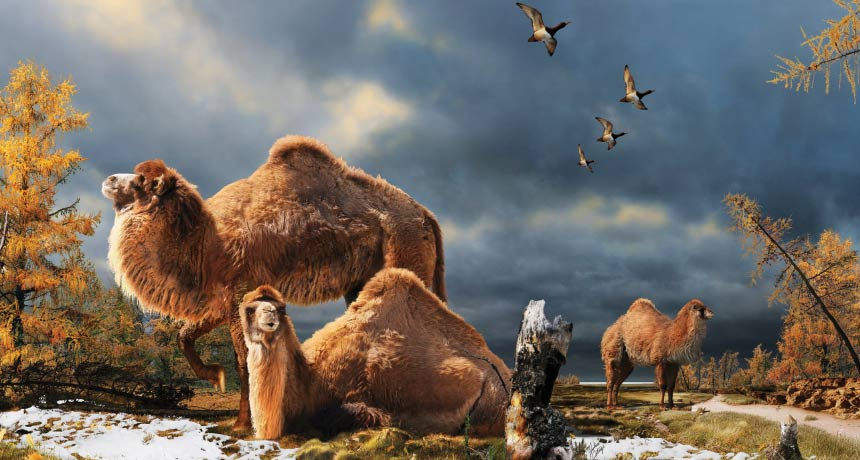 illustration of life in the Pliocene