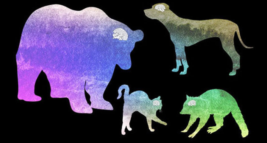 composite image of various animals