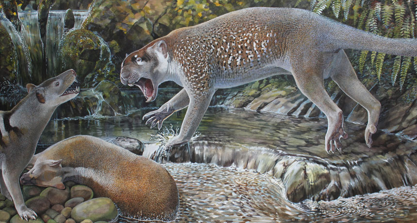 marsupial lion illustration