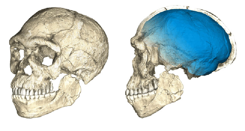 CT scans of Homo sapiens fossils