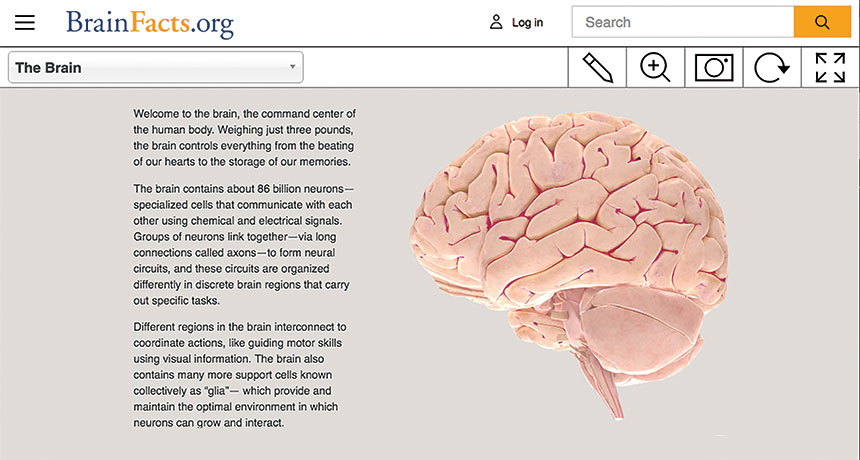 screenshot of Brainfacts.org