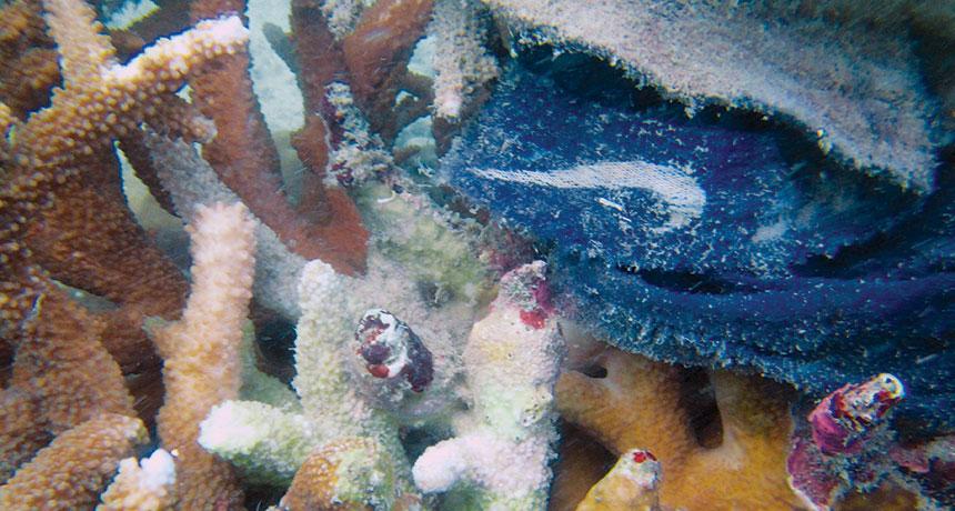 sick corals