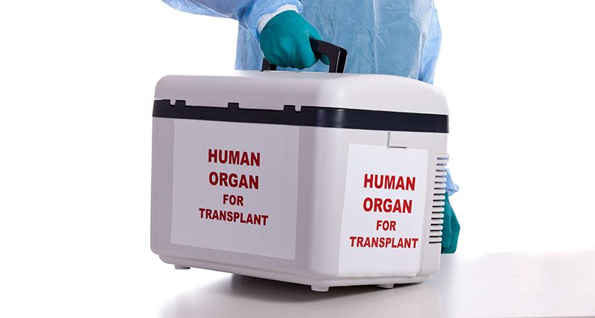transplant cooler