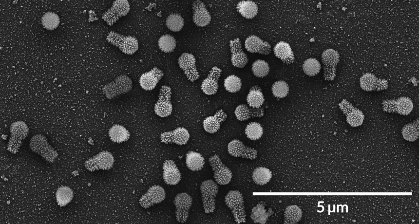 tupanvirus particles