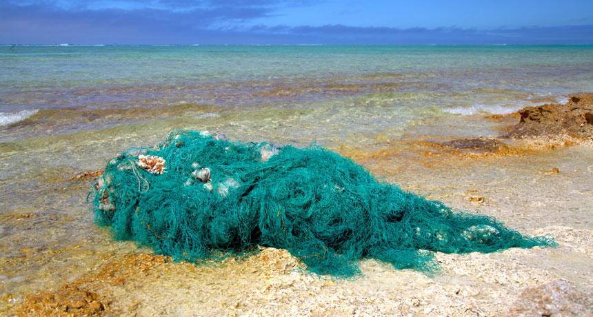 fishing net washed ashore