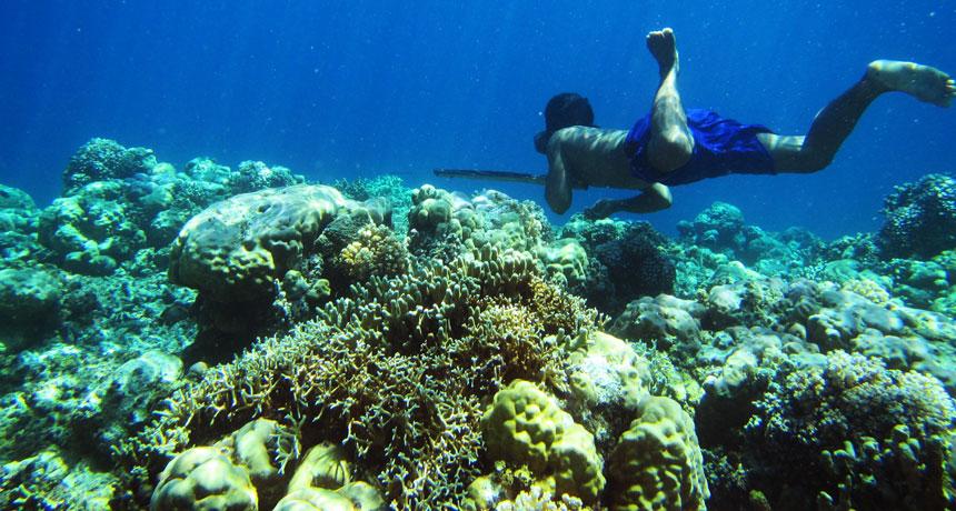 Bajau diver spear fishing