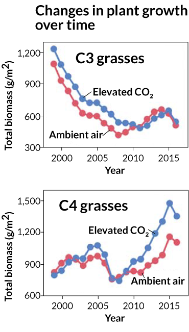 graphs showing changes in plant growth over time