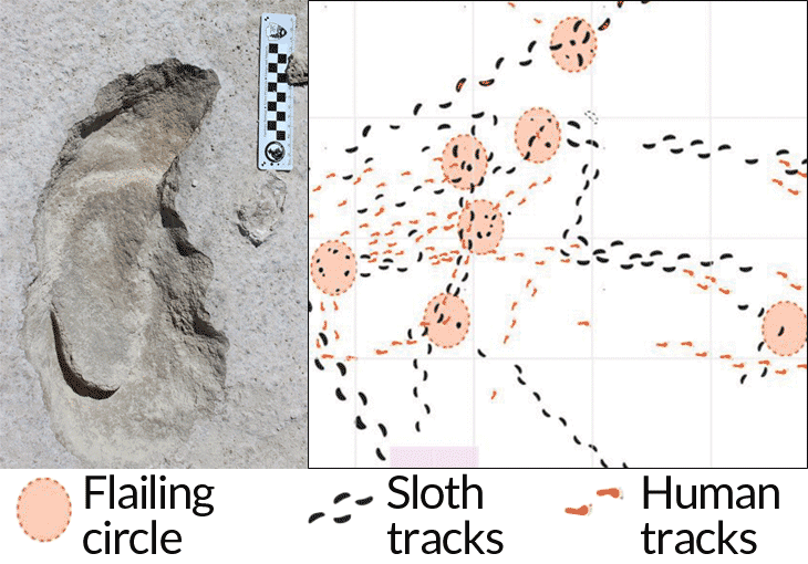 human and giant sloth footprints