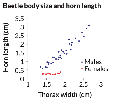 a graph of male Asian rhinoceros beetle body size and horn length compared to thorax width