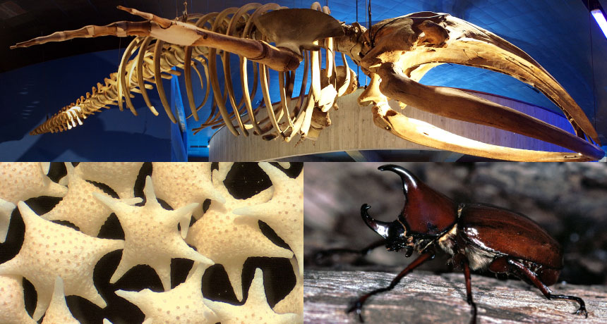 whale skeleton, formanifera skeletons, and a rhinoceros beetle exoskeleton