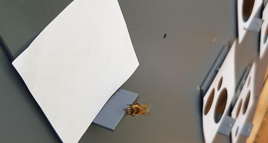 honeybee experiment