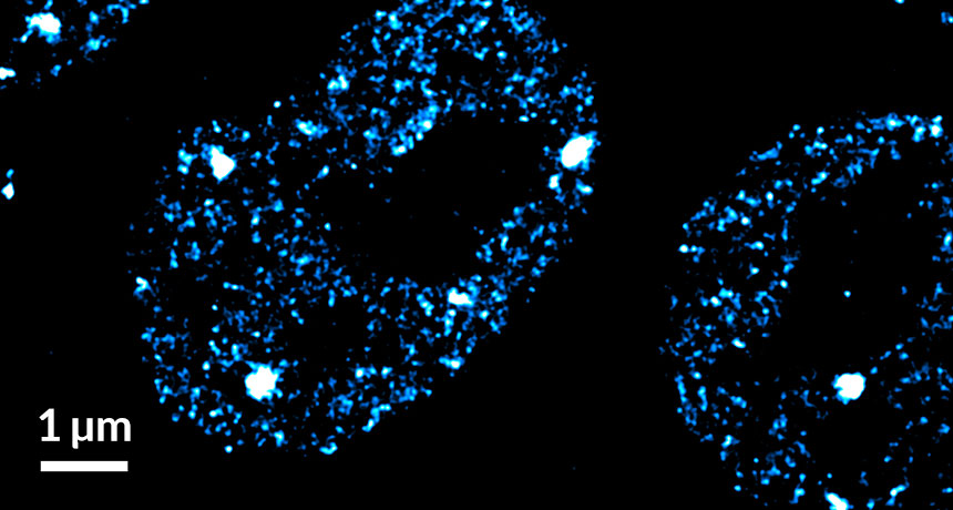 mouse embryonic stem cells