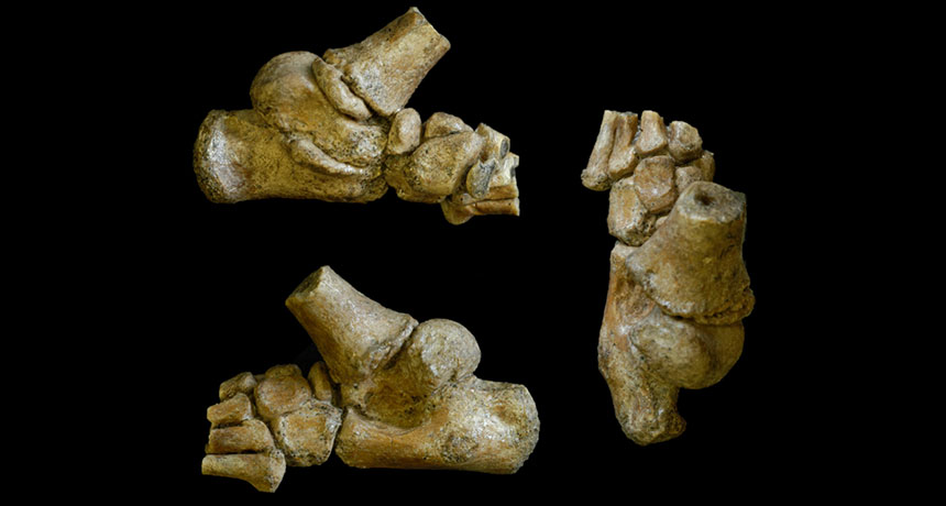 foot fossil