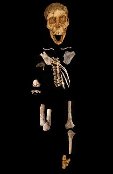 partial skeleton