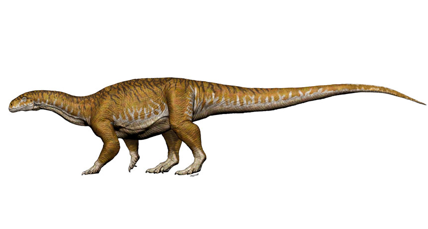 giant long-necked sauropod