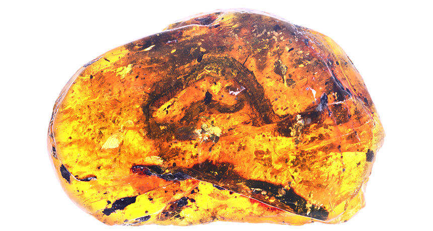 baby snake preserved in amber
