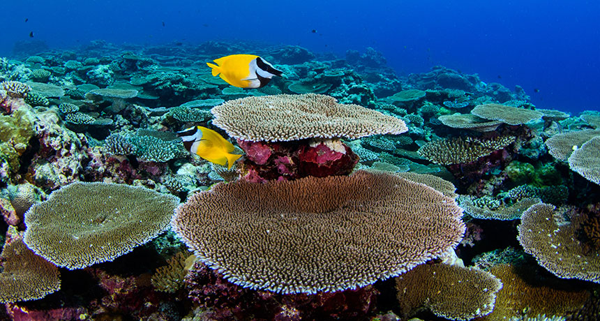 shallow reef