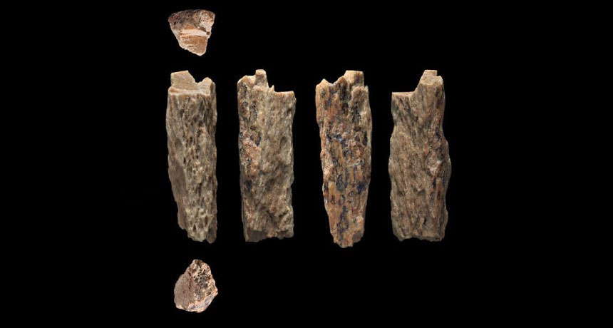 a photo of a 50,000-year-old bone fragment