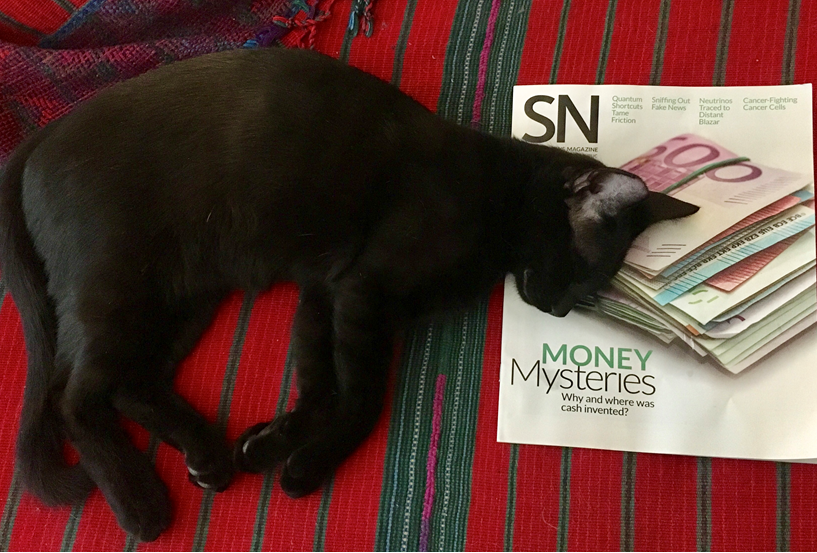 A black cat, Z, using the August 4, 2108 issue as a pillow.
