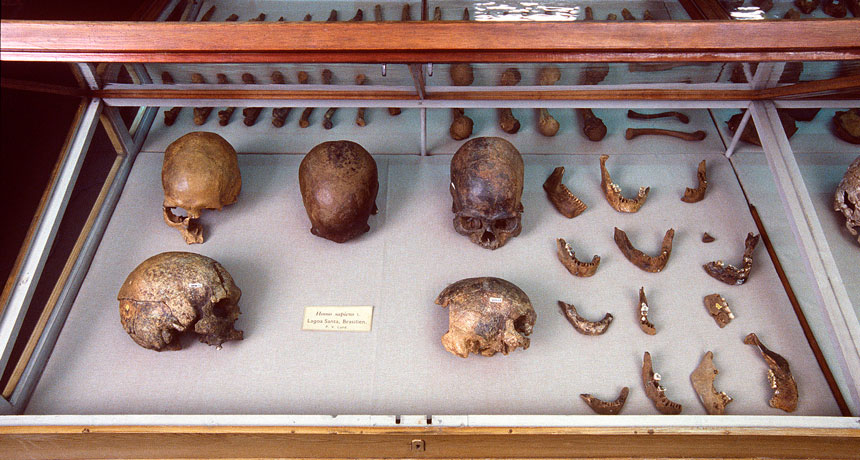 skulls and bone fragments from Lagoa Santa, Brazil