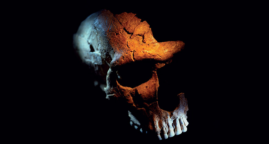 Western European Neandertal skull