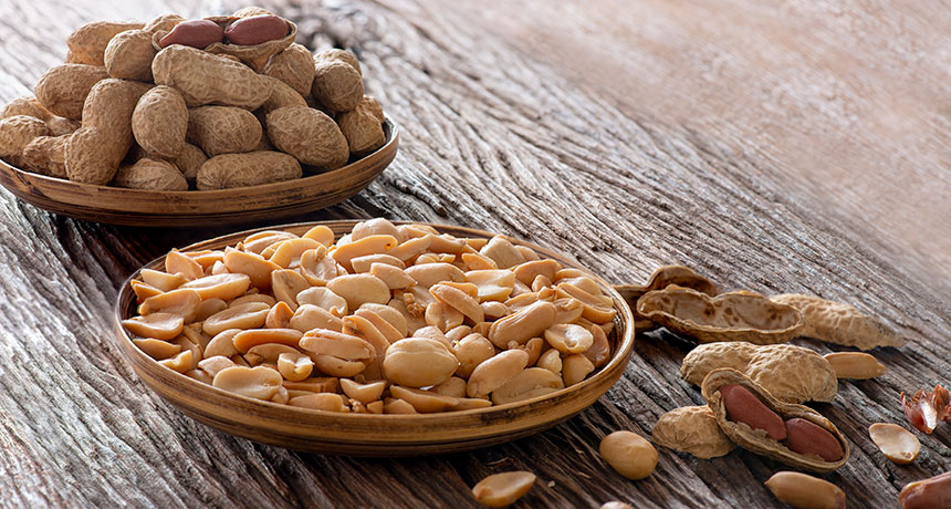 Small doses of peanut protein can turn allergies around | Science News