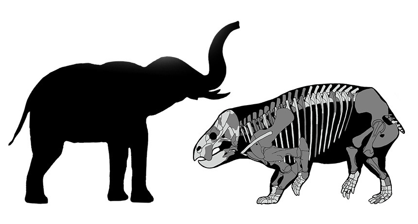 comparison of newly discovered herbivore to modern-day elephant
