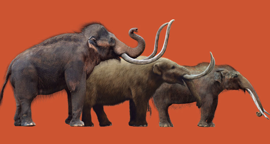 mammoth, mastodon, and gomphothere