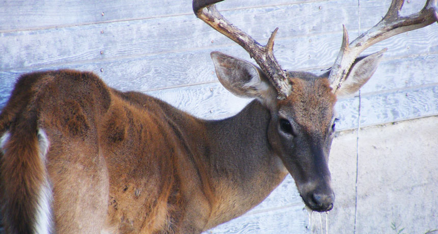 Some soil compounds may fight the spread of chronic wasting