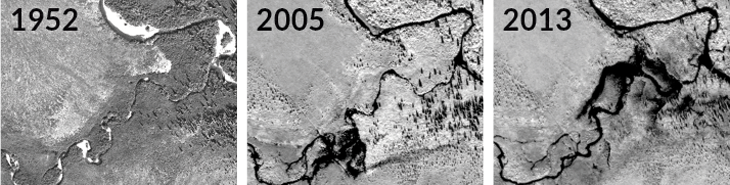 satellite images from 1952, 2005 and 2013 showing how beavers have dammed a stream to make ponds