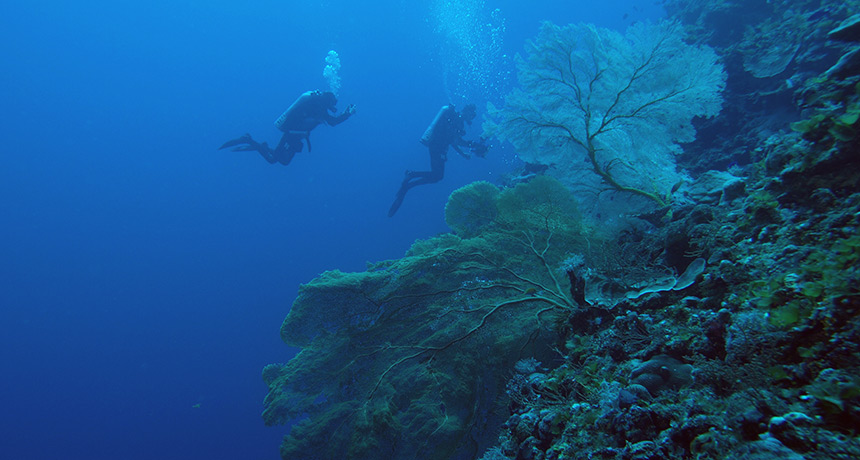 divers in a deep reef near Australia