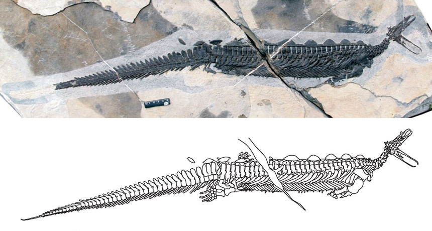 ancient marine reptile