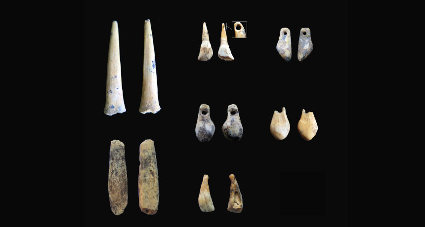 bone points and animal teeth