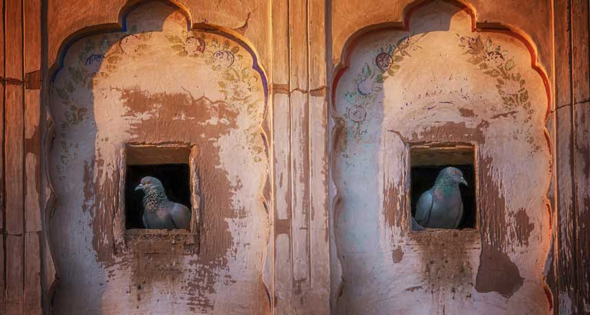 two pigeons, each sitting in a cubbyhole
