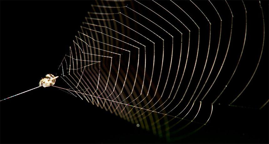 slingshot spider