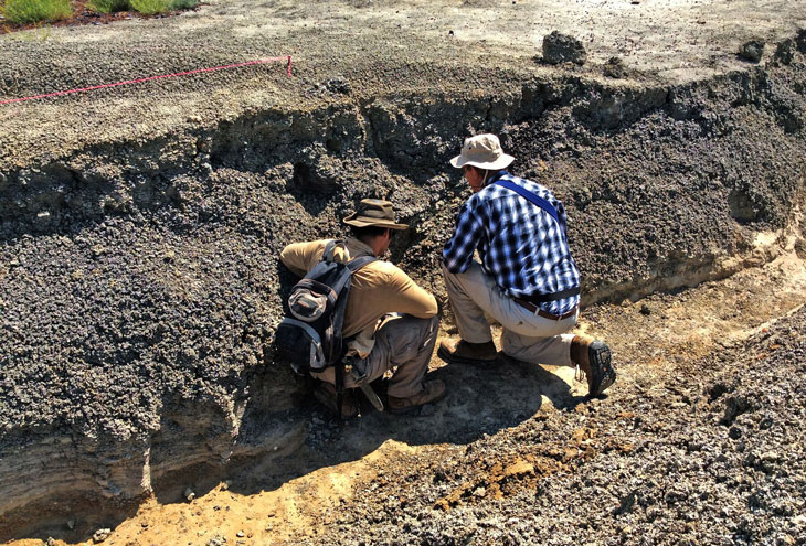 New fossils may capture the aftermath of the dino-killing